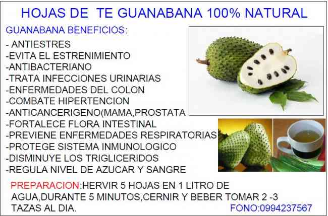 Hojas de te de guanabana producto 100% natural:combate el stre sangre.0994237567
