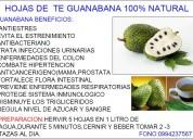 Hojas de te de guanabana producto 100% natural:coml de azucar y sangre.0994237567