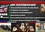 Entrenamiento de perros de toda raza
