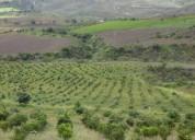 Vendo hacienda productiva con plantación de aguacate, contactarse.