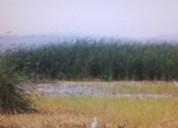 Venta de hectareas cultivos de caÑa, maiz, uva, banano, etc