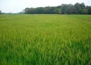 Vendo 25 hectáreas de terreno agrícola en yaguachi 250000 m2