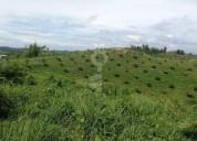 De oportunidad se vende plantacion de palma - rosana cocios 3 dormitorios 1400000 m2