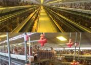 Jaulas para avicultura