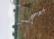 Instalaciones de riego subfoliar