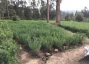 De venta alfalfa, cayambe, sector otón