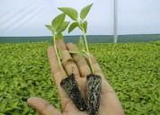 Venta de plantas, hortalizas y ornamentales