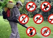 Fumiga usa erradiacadores de plagas