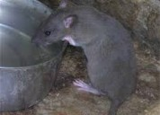 Telf 0992448828 cajas de cebado para atrapar ratas y ratones