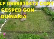 Cortamos cesped y jardineria telef 2428098