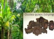 Ishpingo (flor de canela) 100% natural, del amazonia- productos naturales puros al por mayor y menor