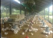 De oportunidad vendo granja avicola....