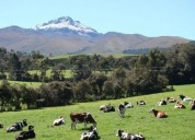 Hacienda ganadera sangolqui barrio san fernando 92 hect 920000 m2