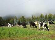 Se vende hacienda en cayambe – pisambilla
