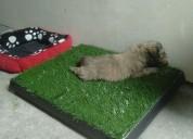 Pet potty o alfombra de mascotas