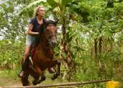 Se vende caballo linea paso perunano