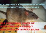 Telf 2428098 control de plagas roedores e insectos