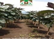 En venta terreno en atuntaqui  sector san roque