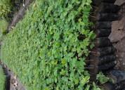Viveros reforesta venta de plantas