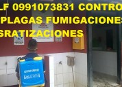 Telf 0991073831 servicio fumigaciones y sanitacion