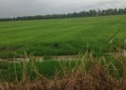Terreno agrícola 7.5 hectáreas en febres cordero