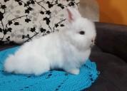 Lindas mascotas  conejitos mini