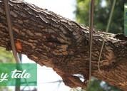 Servicio de poda y tala de arboles en todo el ecuador