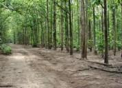 De gran oportunidad vendo finca de 12 hectareas