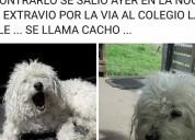 Ayuda a encontrar a mi mascota