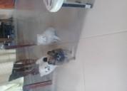Cachorros pomerania toy una hembrita blanca y 2mac