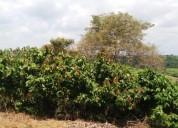 Alquiler cacaotera en guayaquil
