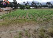 Venta de terreno en tabacundo sector cananvalle en pedro moncayo