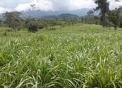 Hacienda finca terreno propiedad de 392 has vendo en lita imbabura ecuador en ibarra