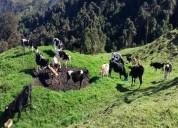 nono propiedad de 482 hectareas ganadera agricola y floricola en quito