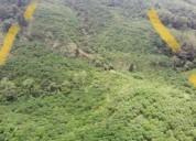 Hermosa finca 31 hectareas cerca a patricia pilar en santo domingo