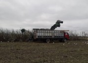 Camion 1115 en la troncal