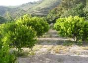 De oportunidad se  vende lindo terreno en puellaro