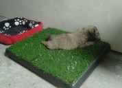 Pet potty en quito 2526826