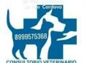 Veterinaria pet salud guayaquil 24 horas dr ortuño