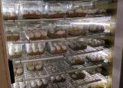 Todas las especies de huevos de loros fértiles.