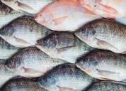 Rentabilidad con acuicultura orgánica