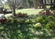 Plantas de palmito en venta