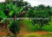 Vendo 9 hectareas