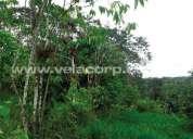 Vendo 1 hectarea de terreno