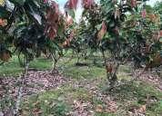 De oportunidad hacienda aviher 336 hectareas.