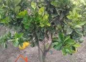 Venta de terreno en chaltura 3 hectáreas con agua