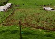 Arriendo propiedad agrÍcola y fabrica de lÁcteos
