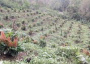 Finca de 17,7 hectareas en venta