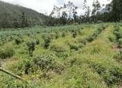 Vendo terreno de 4 hectareas.