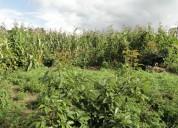 Terreno de venta en cotacachi sector quiroga